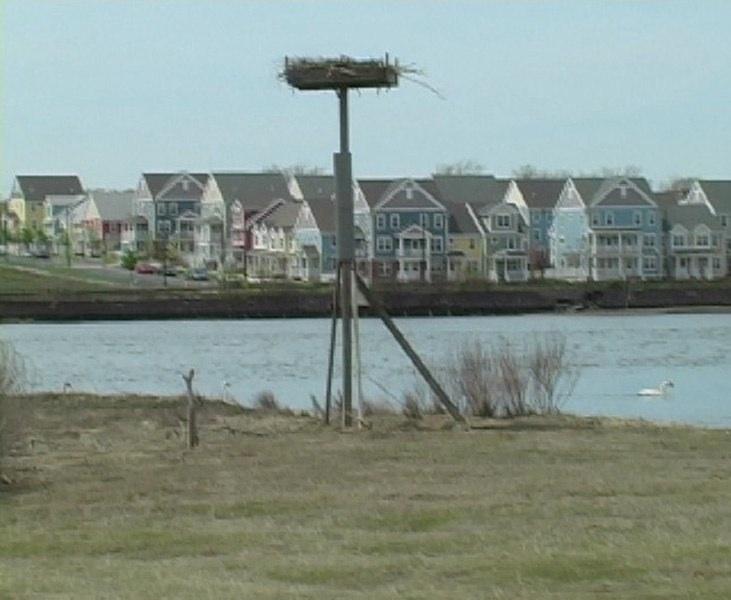 Grannis IslandBirds